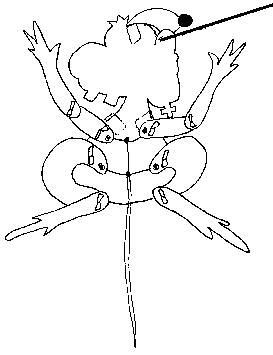 hampelkleid